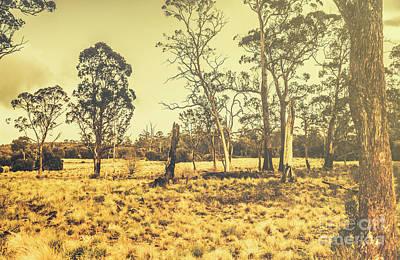 Semi Dry Photograph - Waratah Tasmania Bush Landscape by Jorgo Photography - Wall Art Gallery