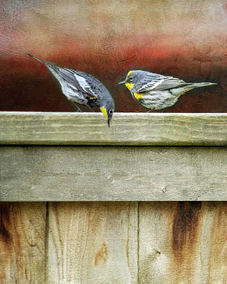 Warbers On The Fence Art Print