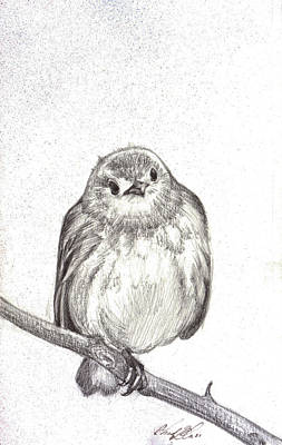 Mindful Drawing - Warbler by Chad Glass