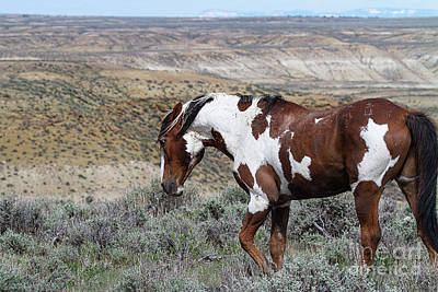 Photograph - Warhorse by Jim Garrison