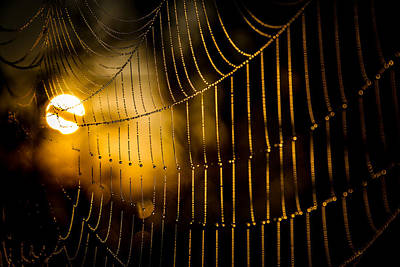 Photograph - Warm Cobwebs And Dewdrops by Chris Bordeleau