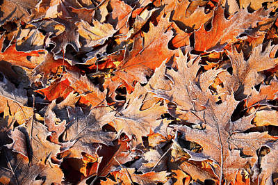 Photograph - Warm Colors Frosty Leaves by Carol Groenen