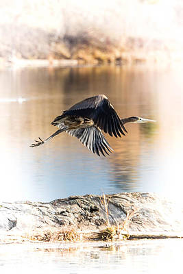 Big Thompson River Photograph - Warm Heron by Bryan Moore