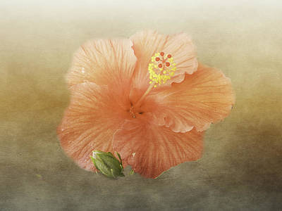 Warm Hibiscus Art Print
