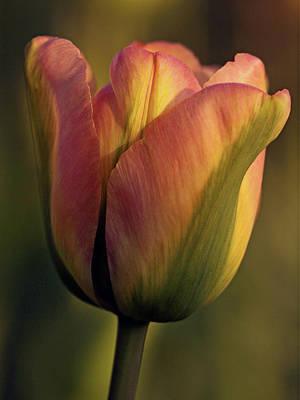 Photograph - Warm Light by Inge Riis McDonald