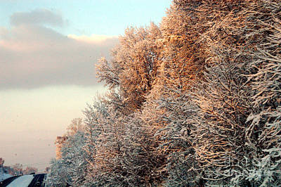 Photograph - Warm Light Snow by Clayton Bruster