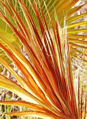 Palm Photograph - Warm Palm 14 by Jean Booth