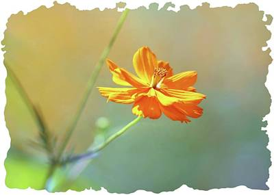 Photograph - Warm Pastel Flower by Ellen Barron O'Reilly