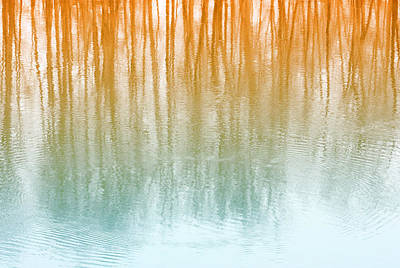 Photograph - Warm Reflections by Barbara  White