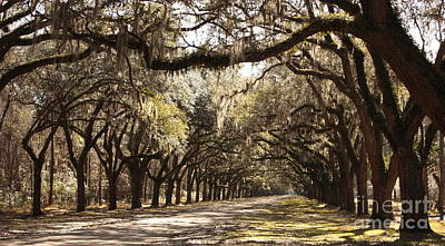 Large Oak Tree Photograph - Warm Southern Hospitality by Carol Groenen