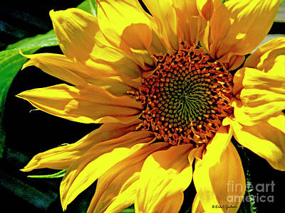 Photograph - Warm Welcoming Sunflower by Dale E Jackson