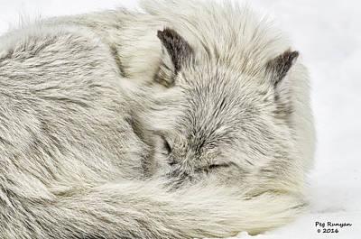 Photograph - Warm Wolf by Peg Runyan