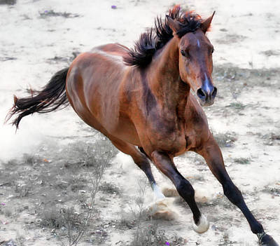 Domestic Animals Photograph - Warmblood Horse Galloping by Vanessa Mylett