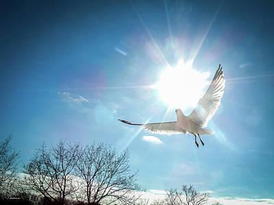 Photograph - Warmed Wings by Glenn Feron