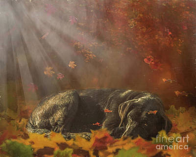 Sleeping Dog Digital Art - Warming Rays by Jan Galland