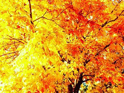 Photograph - Warmth Of Fall by Michael Oceanofwisdom Bidwell