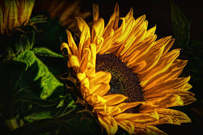 Photograph - Warmth Of The Sunflower by Michael Hope