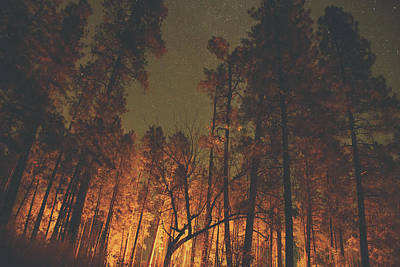 Photograph - Warmth Of Trees And Stars by Kunal Mehra