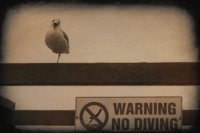 Photograph - Warning No Diving 2 by Ernie Echols