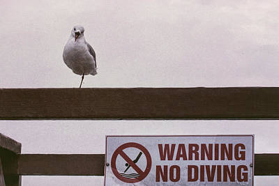 Photograph - Warning No Diving 3 by Ernie Echols