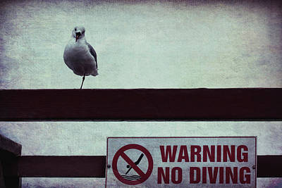 Photograph - Warning No Diving 4 by Ernie Echols