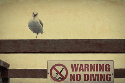 Photograph - Warning No Diving by Ernie Echols