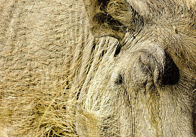 Beautifull Photograph - Warthog I by Andy-Kim Moeller