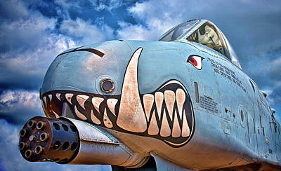 Photograph - Warthog by Murray Bloom