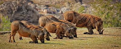 Photograph - Warthogs Doing Lunch by Joe Bonita