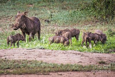 Warthogs Near A Water Hole In Tarangire National Park In Tanzani Art Print by Mariusz Prusaczyk