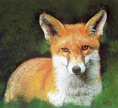 Painting - Wary Fox by Richard James Digance