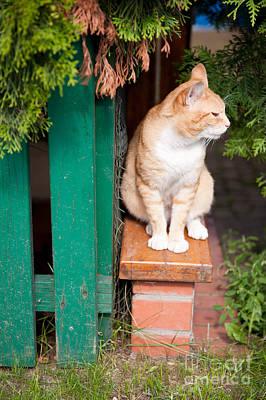 Wary Stray Waif Cat Sitting Art Print by Arletta Cwalina