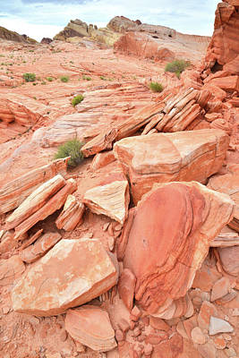 Photograph - Wash 4 Color In Valley Of Fire by Ray Mathis