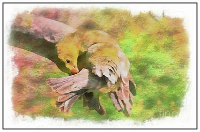 Photograph - Wash Day Goldfinch, Digital Paint by Debbie Portwood
