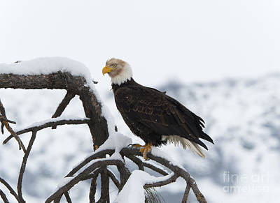 Eagle Photograph - Wash That Face by Mike Dawson