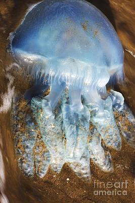 Washed-up Jellyfish Art Print