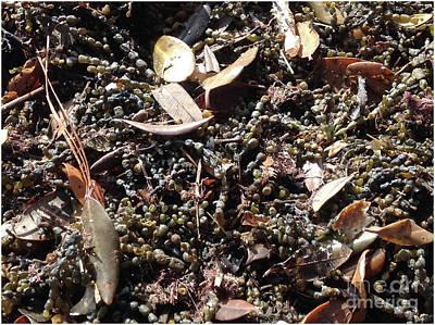 Seaweed - Pearls Of The Sea Art Print by Karen Moren