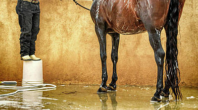 Photograph - Washing A Horse by Robert FERD Frank
