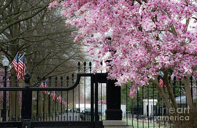 Photograph - Washington Blossoms by Bianca Nadeau