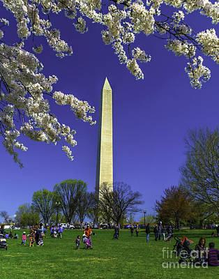 Photograph - Washington Cherry Blossoms by Nick Zelinsky
