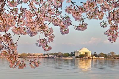 Washington Dc Jefferson Memorial Framed By Cherry Blossoms Original by Dasha Rosato