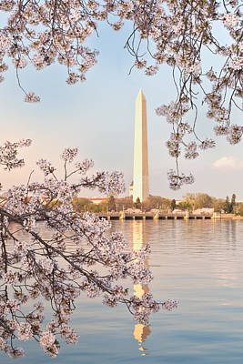 Washington Dc Washington Monument Framed By Cherry Blossoms Bran Original by Dasha Rosato