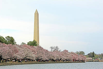 Photograph - Washington High Above The Cherry Blossoms by Cora Wandel