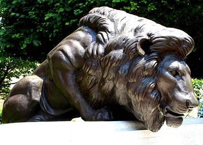 Photograph - Washington Lion by Randall Weidner