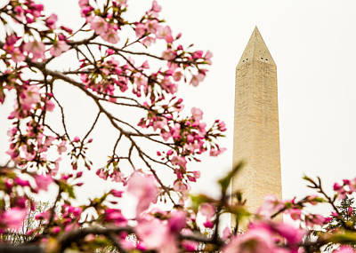 Photograph - Washington Monument 2 by Karen Saunders