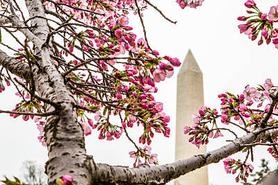 Photograph - Washington Monument 3 by Karen Saunders