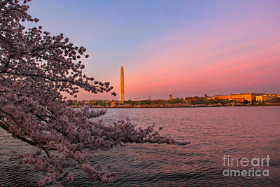 Ollivrosa Wall Art - Photograph - Washington Monument And Cherry Blossoms by Amy Sorvillo