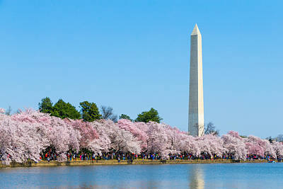 Photograph - Washington Monument And Cherry Blossoms by SR Green