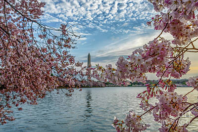 Photograph - Washington Monument Cherry Blossoms Sky by Thomas R Fletcher