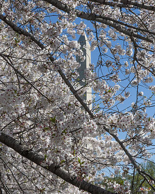 Photograph - Washington Monument Through The Cherry Blossoms Ds0066 by Gerry Gantt